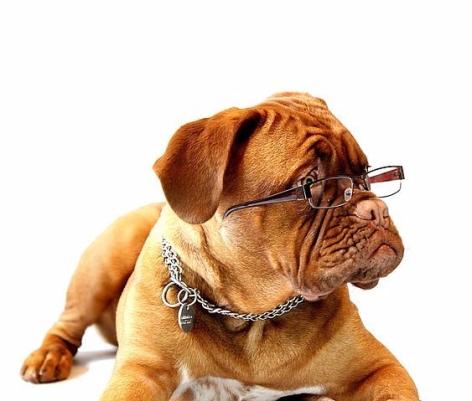 hund-brille.jpg